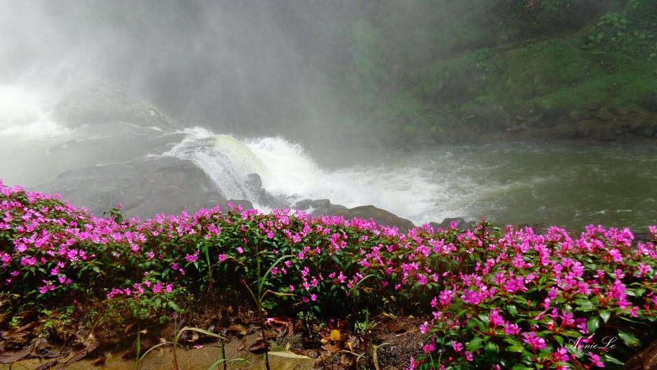 Những khóm hoa mọc ở chân Thác Dam'bri