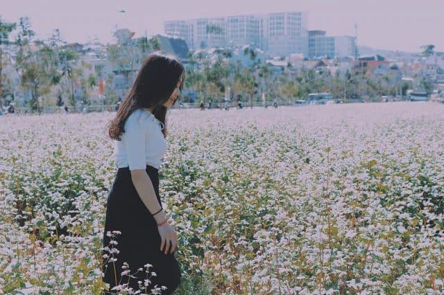Hoa tam giác mạch Đà Lạt ở khu vực ấp Ánh sáng