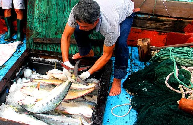 Ngư dân ở đảo Cồn Cỏ