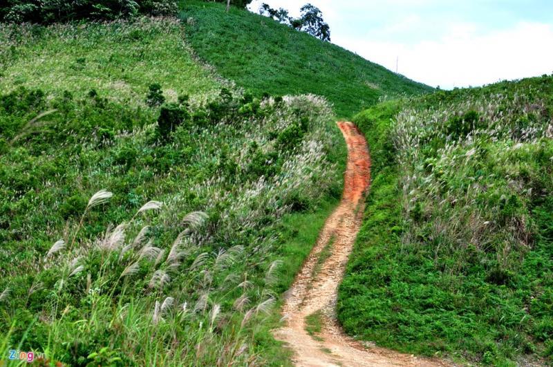 Những con đường cỏ lau mộc mạc níu chân du khách (Ảnh: ST)