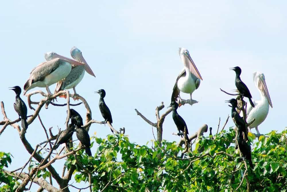 Vườn chim Lâm Viên quy tụ rất nhiều loài chim
