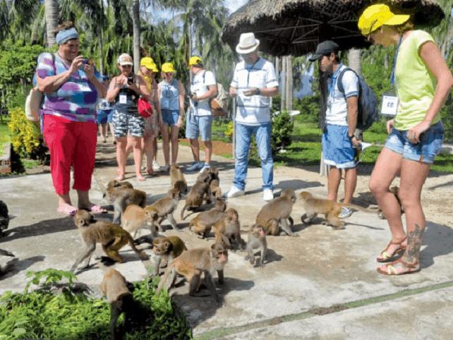 Rất nhiều du khách nước ngoài tới với đảo khỉ