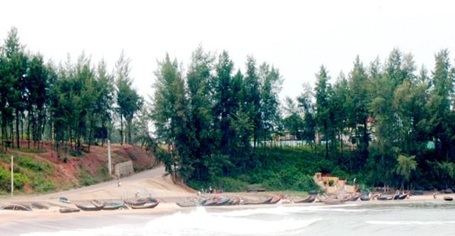 Hàng phi lao tại bãi biển Cửa Tùng Quảng Trị