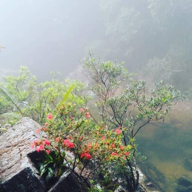 Thiên nhiên, và thực vật ở núi Bạch Mã vô cùng phong phú