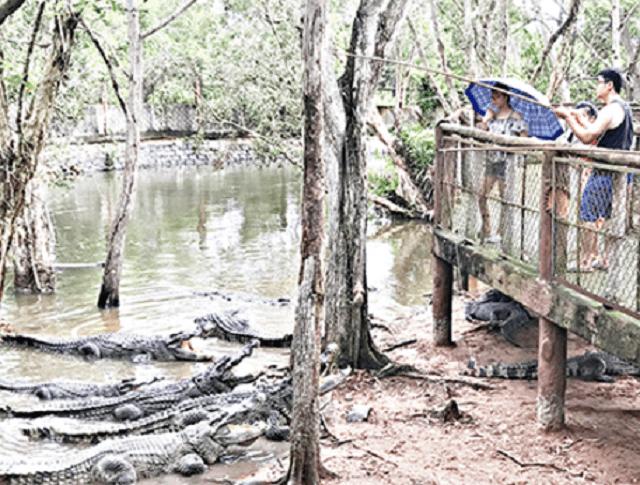 hoạt động câu cá sấu thu hút nhiều sự quan tam của khách du lịch