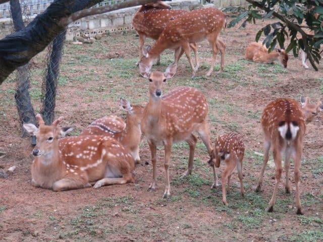 Hươu - Khu du lịch sinh thái Diễn Lâm