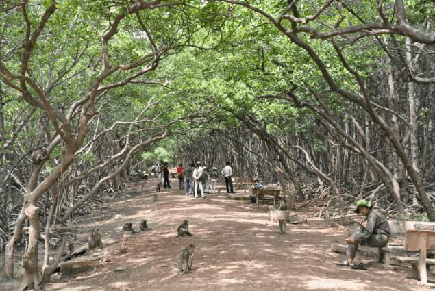 Đảo Khỉ ở Cần Giờ (Ảnh ST)