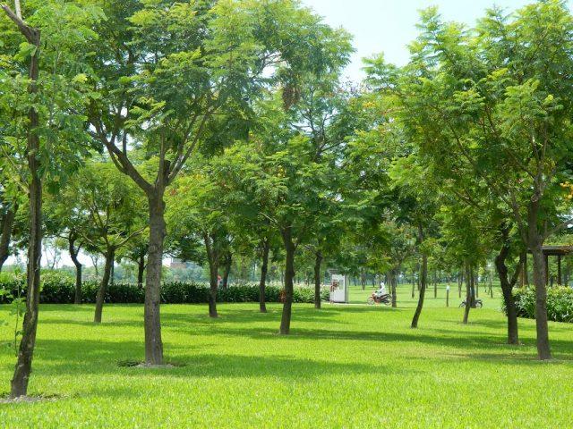Địa điểm vui chơi ở Hà Nội - Công viên 01