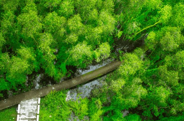khu du lịch sinh thái cần giờ có đa dạng các loại động thực vật