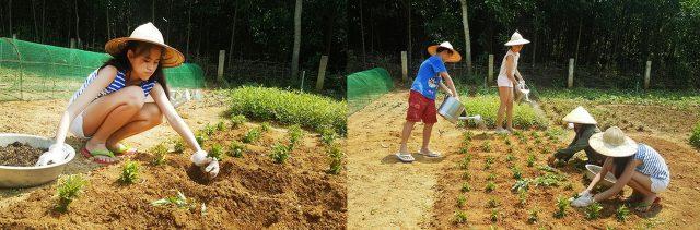 Khu làm vườn Chày Lập Farmstay Quảng Bình
