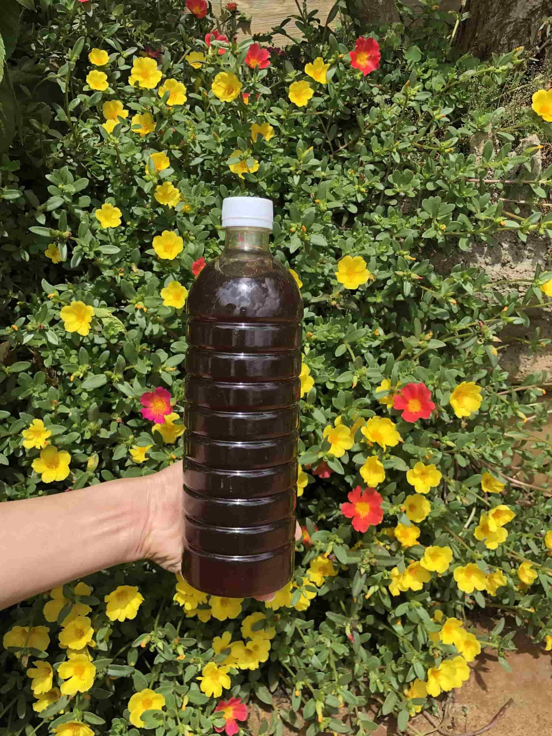 mật ong hoa cà phê - dacsanmiennui.net