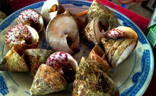Ốc Mắt ngọc nổi tiếng trên đảo Cồn Cỏ