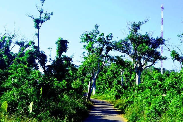 Đảo Cồn Cỏ - Rừng cây nguyên sinh xanh tốt