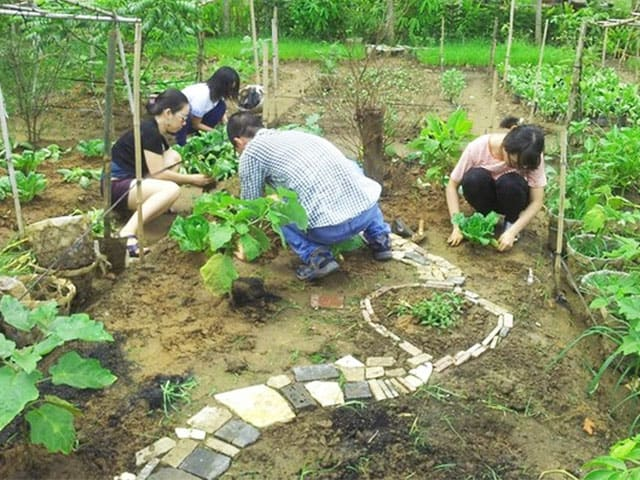 Du khách đang thực hành trồng cây