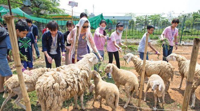 Du khách cho cừu ăn tại The BCR Farm