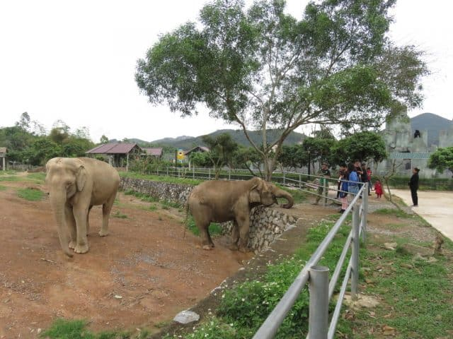 Chú Voi Hoang dã - Khu du lịch sinh thái Diễn Lâm