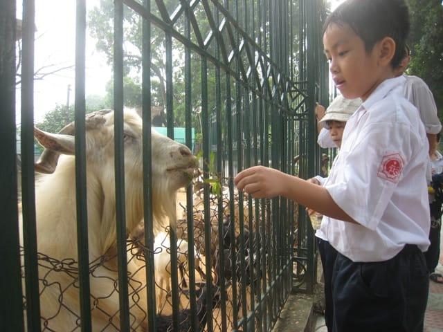 Các em nhỏ rất thích thú khi được tự tay cho các loài động vật ăn
