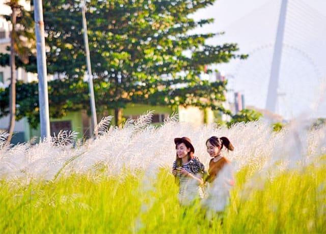 Cánh đồng cỏ lau trắng Đà Nẵng 02