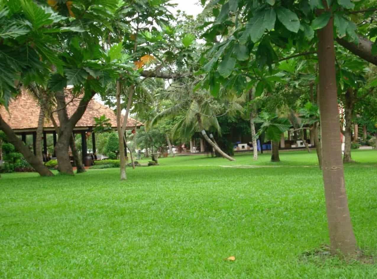 Nằm thư giãn trên thảm cỏ xanh