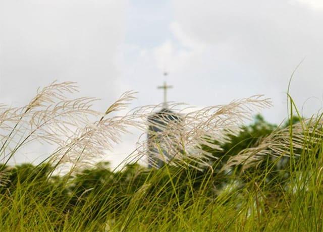 Cánh đồng cỏ lau trắng Đà Nẵng 07
