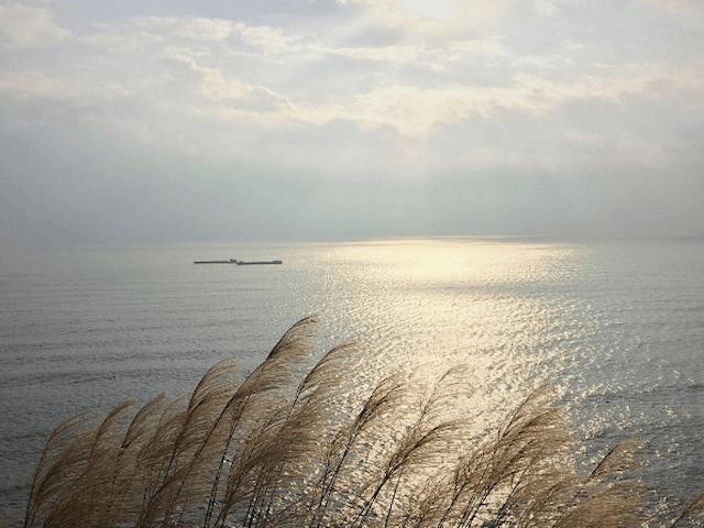 Bãi Đông Thanh Hóa 04