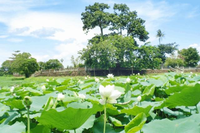 Di tích Cố đô Huế - Hồ Tịnh Tâm