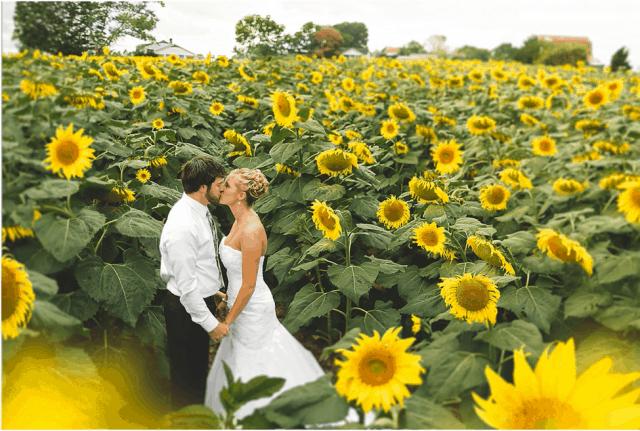 Ghi lại những khoảnh khắc cánh đồng hoa Hướng Dương Nghệ An