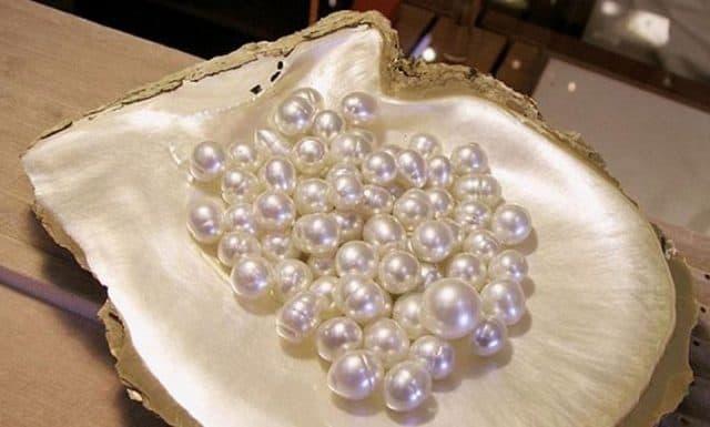 Ngọc trai thật có hình dạng, kích thước không giống nhau