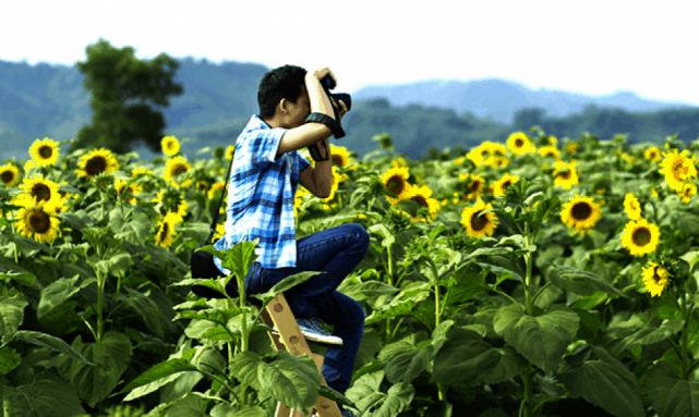 Cánh đồng hoa Hướng Dương Nghệ An 05