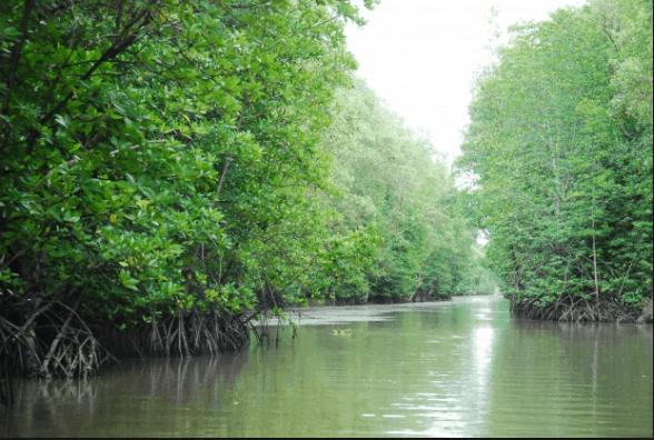 Khu rừng ngập mặn ở Cần Giờ