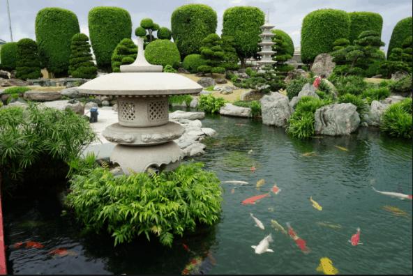 Hồ Cá Koi - giống cá quốc ngư của Nhật Bản
