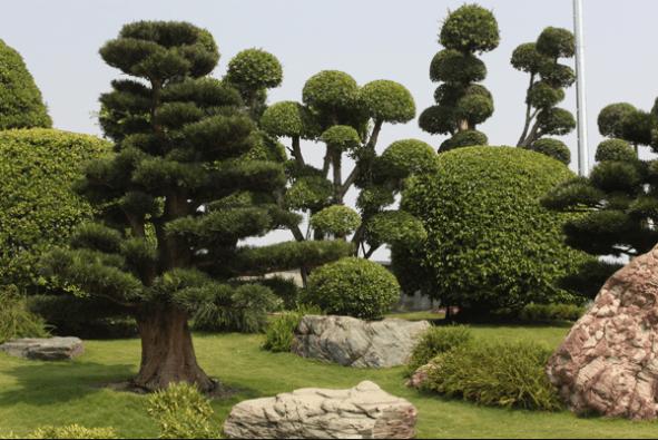 Không gian rộng và trong lành ở công viên Nhật Bản