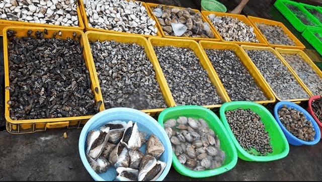 Các loại ngao, sò, ốc đa dạng vùng biển