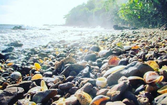 Bãi đá Hòn Heo