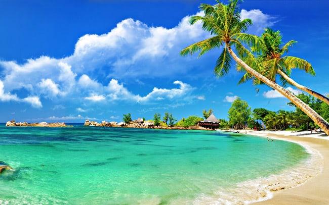 Hàng dừa xung quanh bãi biển