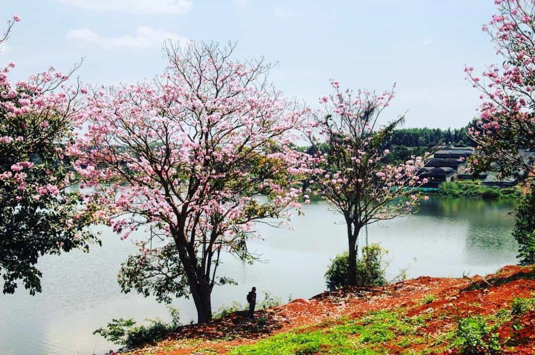Hồ Nam Phương - du lịch Bảo Lộc 01