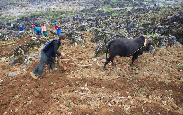Đến Hà Giang khám phá cao nguyên đá Đồng Văn