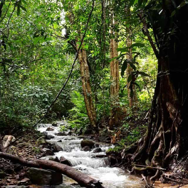 Du khách chiêm ngưỡng vẻ đẹp thiên nhiên, sự phong phú đa dạng của hệ sinh thái vườn quốc gia (Ảnh sưu tầm)