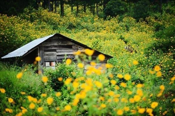 """Khung cảnh vùng cao nguyên này vào mùa hoa dã quỳ nở thực sự sẽ khiến bạn """"ngợp""""  (Ảnh: ST)"""