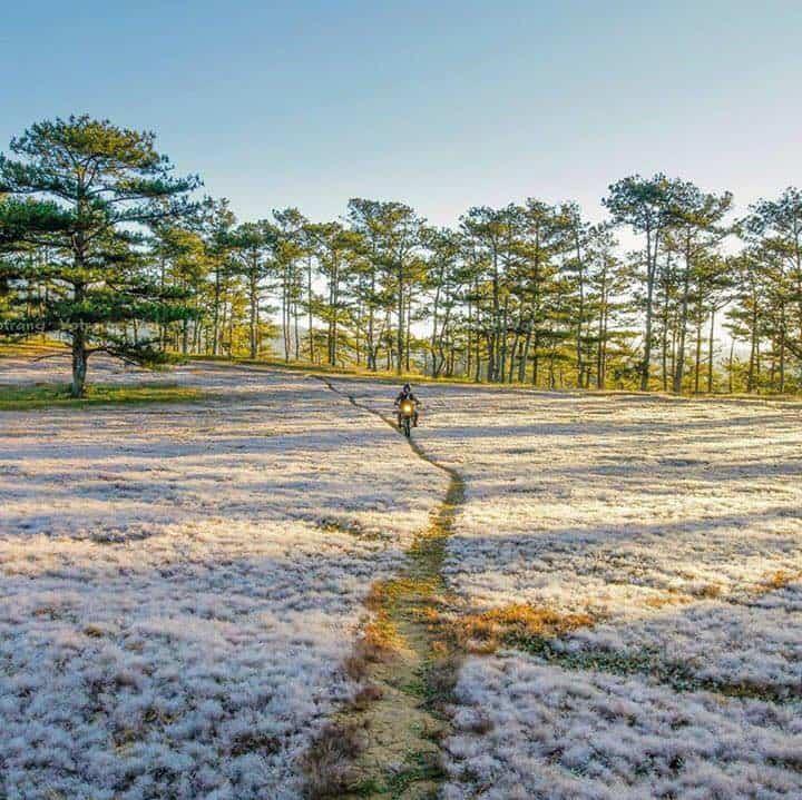 Đồi cỏ tuyết trắng ngắt một góc trời