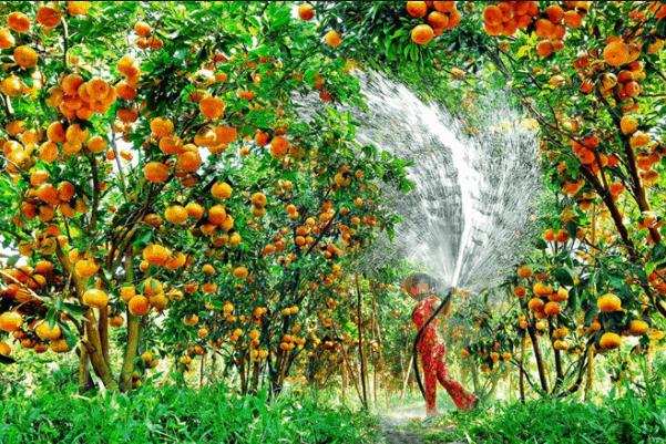 Du lịch vườn trái cây đang là xu hướng được nhiều du khách lựa chọn