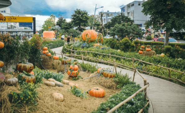 Hình ảnh khu vườn bí ngô tại Sài Gòn