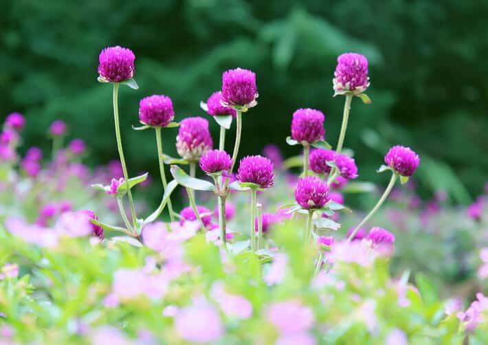 Những bông hoa rực rỡ ở Sapa