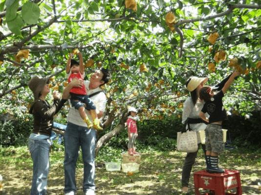 Vườn trái cây Cái Mơn - Địa điểm vui chơi lý tưởng dành cho gia đình