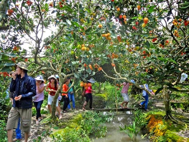 Tham quan vườn trái cây Cái Mơn