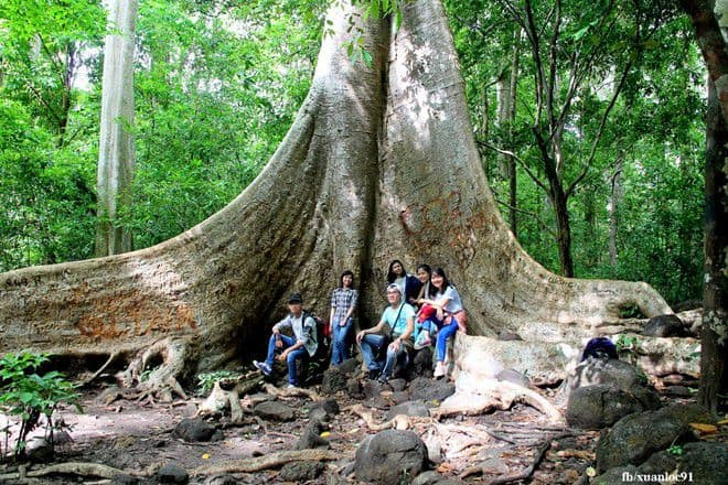 In the national park there are many trees that are thousands of years old