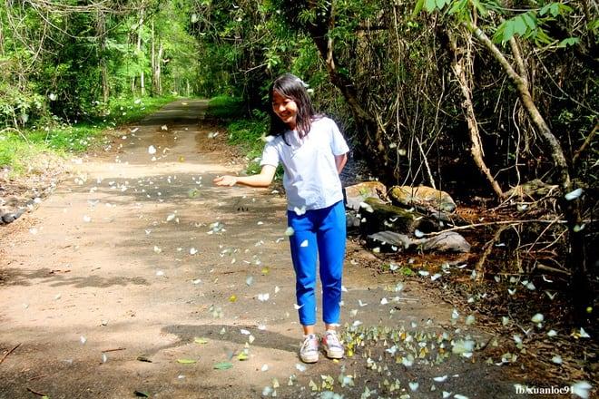Butterfly season at Cat Tien National Park