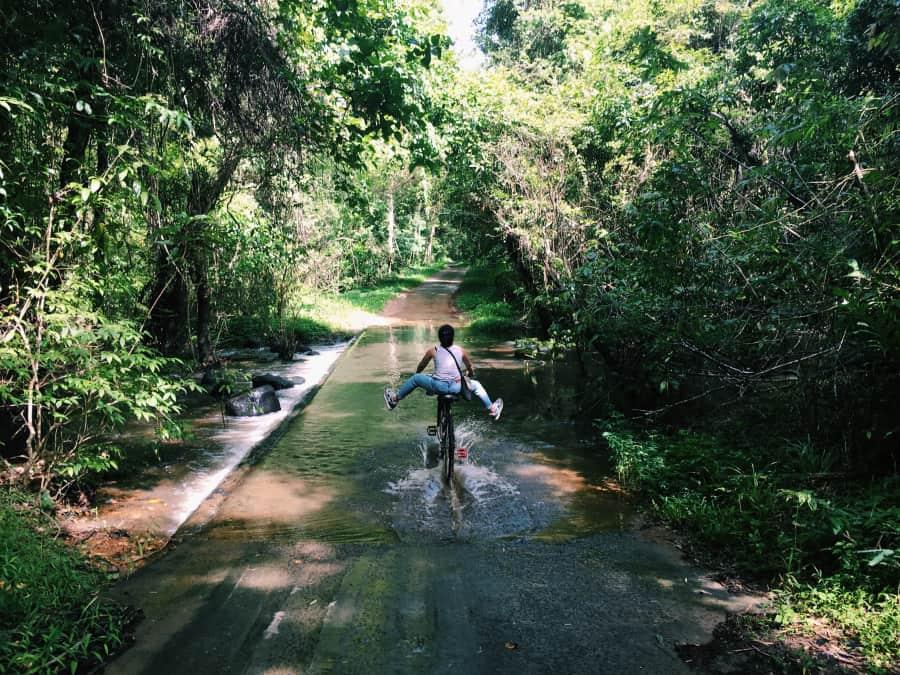 Road to Bau Crocodile