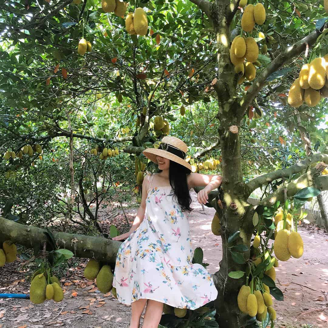 Jackfruit trees are all wrong fruit