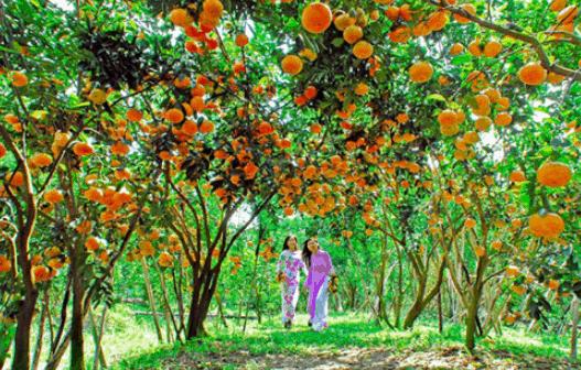 Vườn trái cây Mỹ Khánh (Ảnh ST)